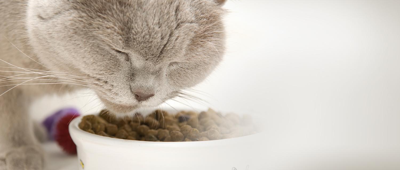 A macskák táplálása