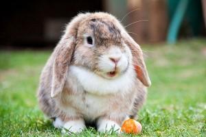 Húsvéti nyuszik - az ünnepi áldozatok2