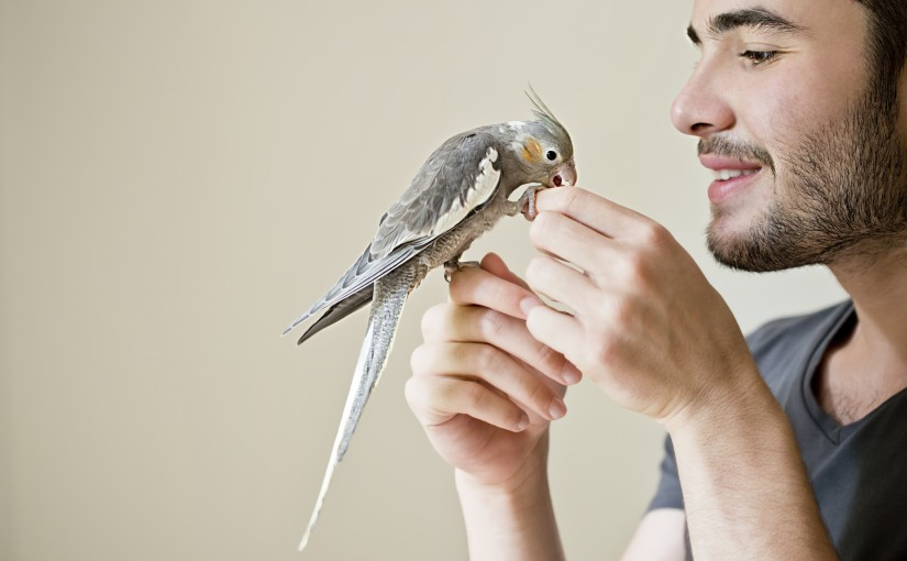Szabad madarak etetése