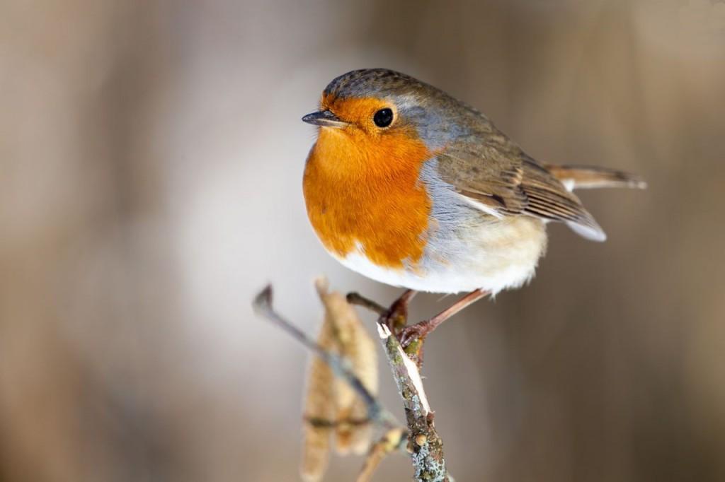 Szabad madarak etetése2