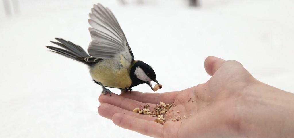 Szabad madarak etetése3