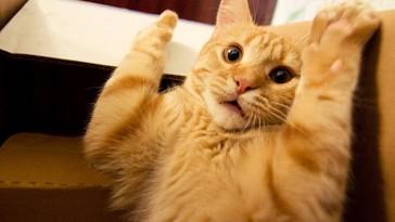Milyen lesz a cica ivartalanítás után?