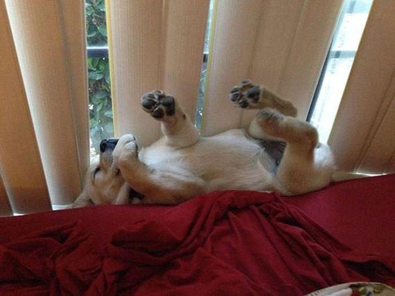 kutyusok-barhol-es-barmikor-szunya-10