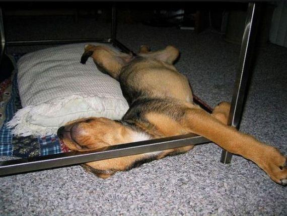 kutyusok-barhol-es-barmikor-szunya-13