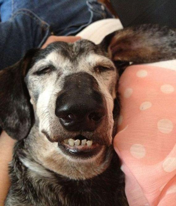 kutyusok-barhol-es-barmikor-szunya-20