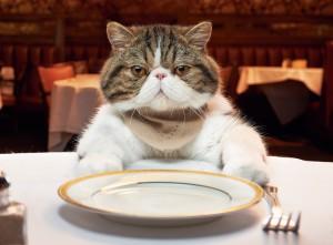 Hogyan etessük macskánkat2