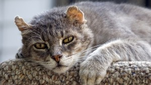 Miért esznek többet az idős macskák2