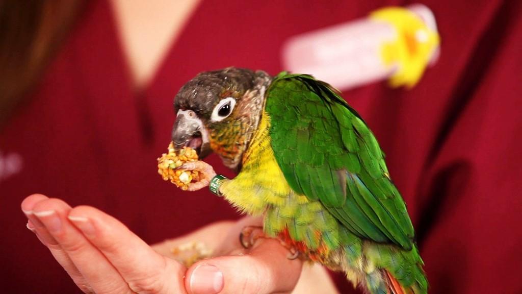 A madarak etetése4