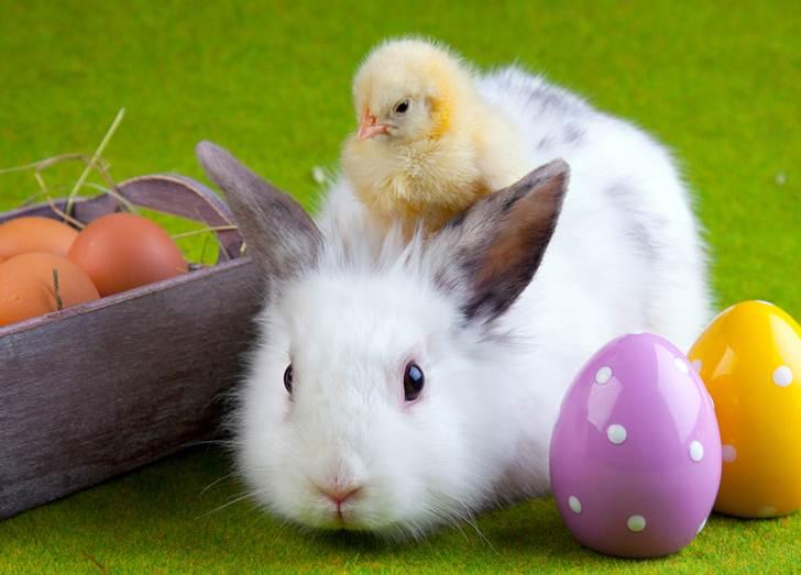 Húsvéti nyuszik - az ünnepi áldozatok4
